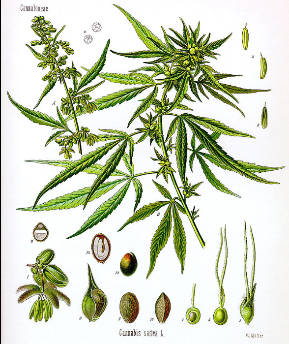 gimmecannabis